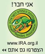 עבור לאתר עמותת הזוחלים הישראלית