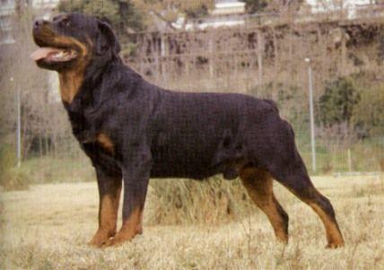 מודרניסטית כלבים מהחיים, כלבים מסוכנים EO-43